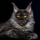Аватар пользователя IRENA16