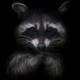 Аватар пользователя CunningRaccoon