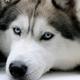 Аватар пользователя blogger154