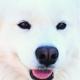 Аватар пользователя Den.Microed