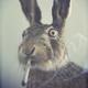 Аватар пользователя Danyn