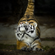 Аватар пользователя TigerCub