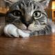 Аватар пользователя Ekurasawa