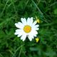 Аватар пользователя bolotnaya86