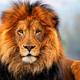 Аватар пользователя lion178