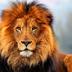 lion178
