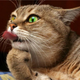 Аватар пользователя Pepyaka55