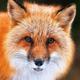 Аватар пользователя Foxy92