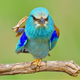 Аватар пользователя FOXGLove81