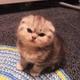 Аватар пользователя Pomidora69