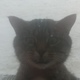 Аватар пользователя TazoVot