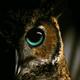 Аватар пользователя Romba158