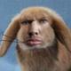 Аватар пользователя maqim