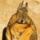 Аватар пользователя dasWeibsbild