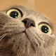 Аватар пользователя 7kisa