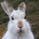 Аватар пользователя Space.Bunny