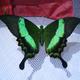 Аватар пользователя 48butterfly