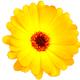 Аватар пользователя hftujo