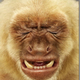 Аватар пользователя O4kovbLu3Meu