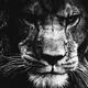 Аватар пользователя Lione74