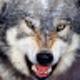 Аватар пользователя modfusu