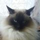 Аватар пользователя MonaA