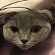 Аватар пользователя Treapochka
