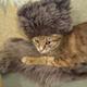 Аватар пользователя Kolyasik1812