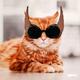 Аватар пользователя Tania.Z