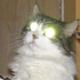 Аватар пользователя murrrf