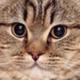Аватар пользователя CandyWrapper78