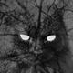 Аватар пользователя Geisterkatze