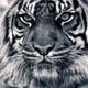Аватар пользователя Barkoff1983
