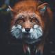 Аватар пользователя Optiguxs
