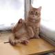 Аватар пользователя drunk.cat