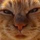Аватар пользователя NCcage