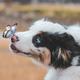 Аватар пользователя doglove