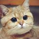 Аватар пользователя Thetis