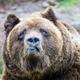 Аватар пользователя aborigen225
