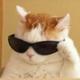 Аватар пользователя Card4Box3r