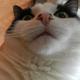 Аватар пользователя Margo582