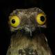 Аватар пользователя NeZloyHorek