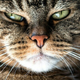 Аватар пользователя Deathnyaka