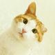 Аватар пользователя Kotsamodelkin