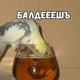 Аватар пользователя CapitanBubun
