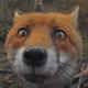 Аватар пользователя kuchka70