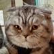 Аватар пользователя Youname34