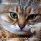 Аватар пользователя Soldatik999