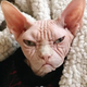 Аватар пользователя Nepuschun
