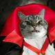 Аватар пользователя ZloyKotyan